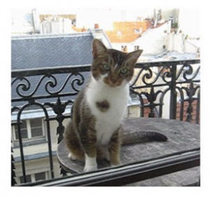 Parisian cat on a Parisian balcony