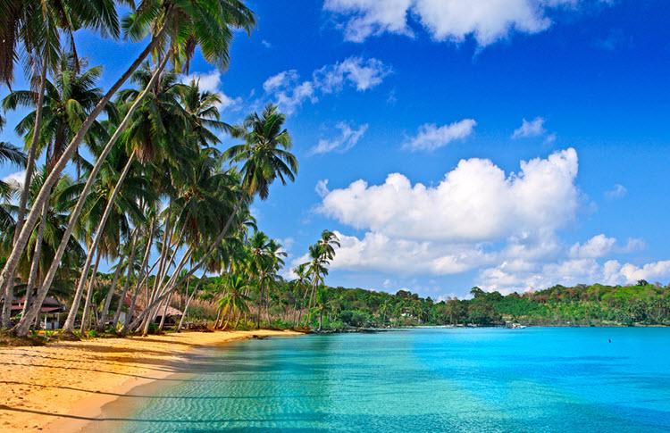f Paradise Beautiful Beach and Palm Trees