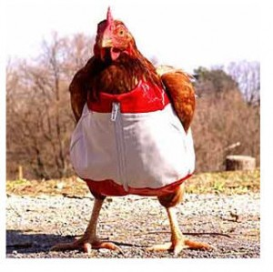 Chicken dressed for dinner. No, not me. (No heels.)
