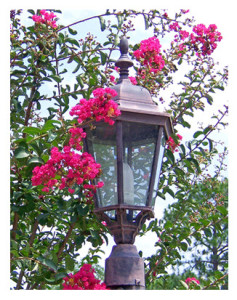 Crepe Myrtle and Lampost