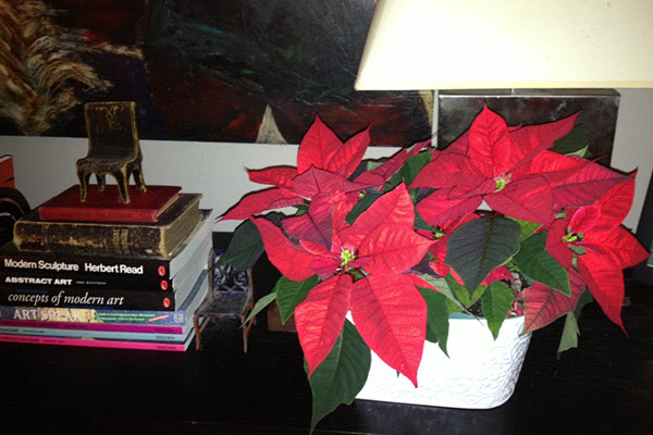 Holiday Display with Poinsettia Books and Antique Chairs