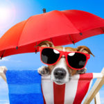 Doggone, It's Hot! Summertime Safety Snippets